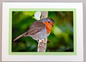 A robin in Teignmouth