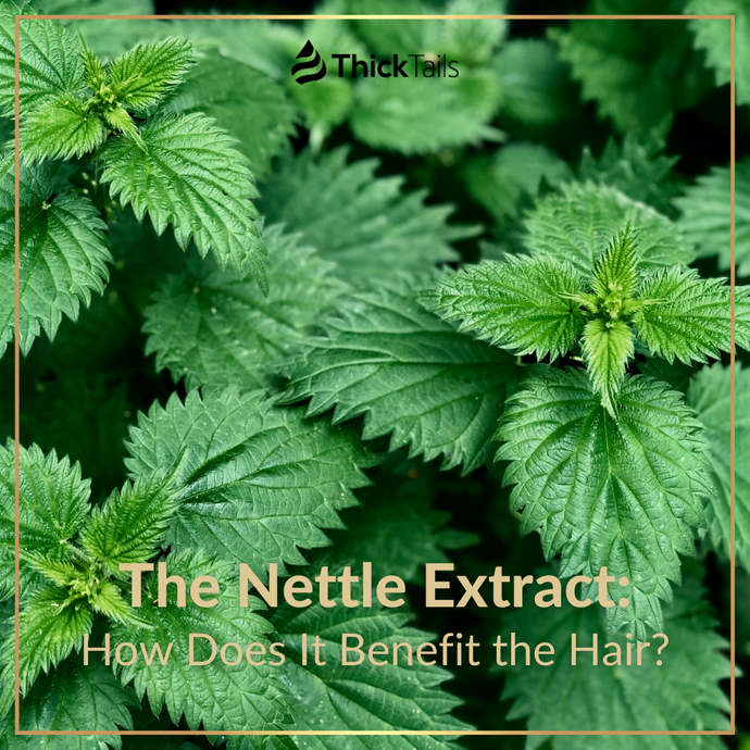 The Nettle Extract: How Does It Benefit the Hair?