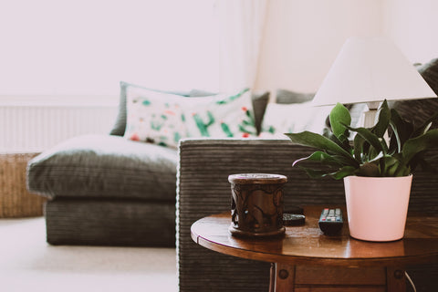 Houseplant on an end table by a sofa