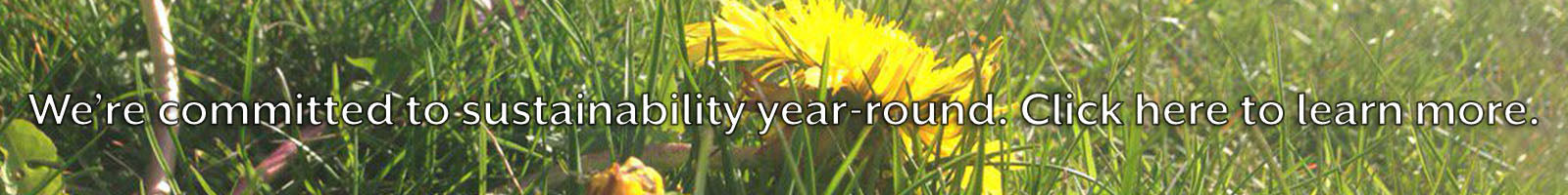 Photo of grass and dandelions with text: We're committed to sustainability year round. Click here to learn more.