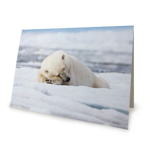 Sleeping Bear Card by Lara Wilson