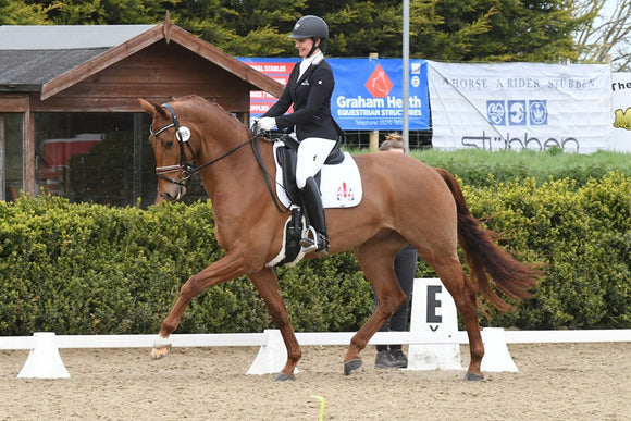 Some horses found by specialist Rebecca Hughes at Classic Dressage