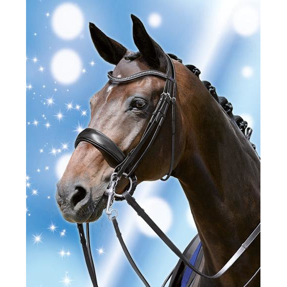 Passier Blu Dream Double Bridle