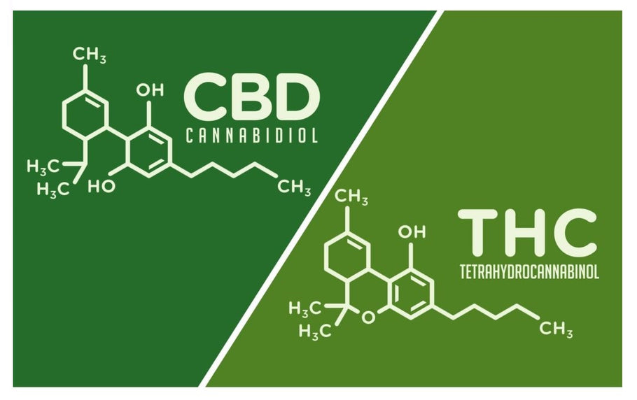 A comparison of CBD and THC