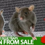 Rat Glue Traps & Mouse Glue Traps Taken Off Of Sale