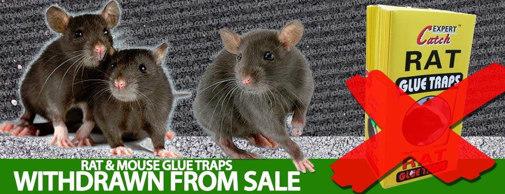 Mouse Glue Traps - Rat Glue Traps