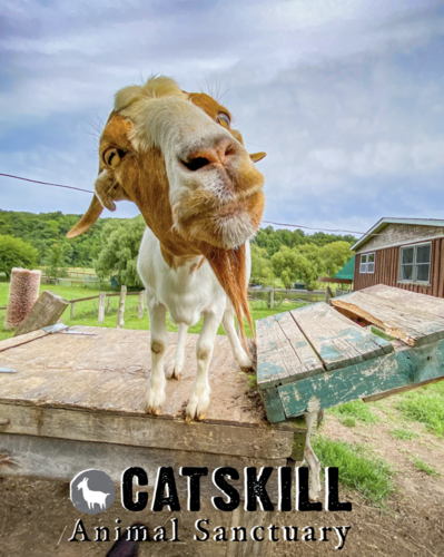 Sanctuary Spotlight: Catskill Animal Sanctuary