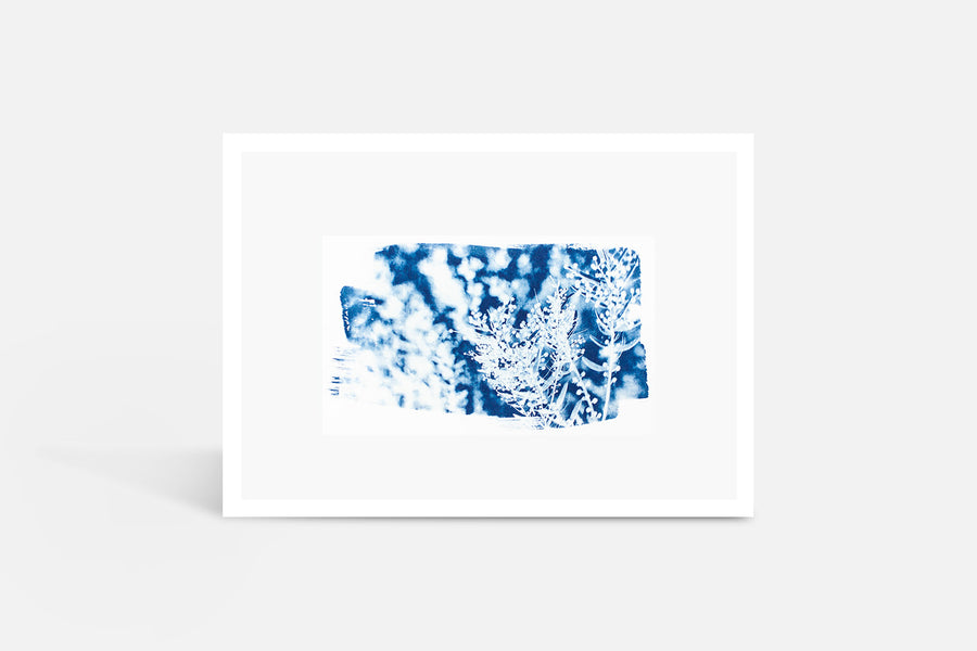 Winter Acacia Cyanotype