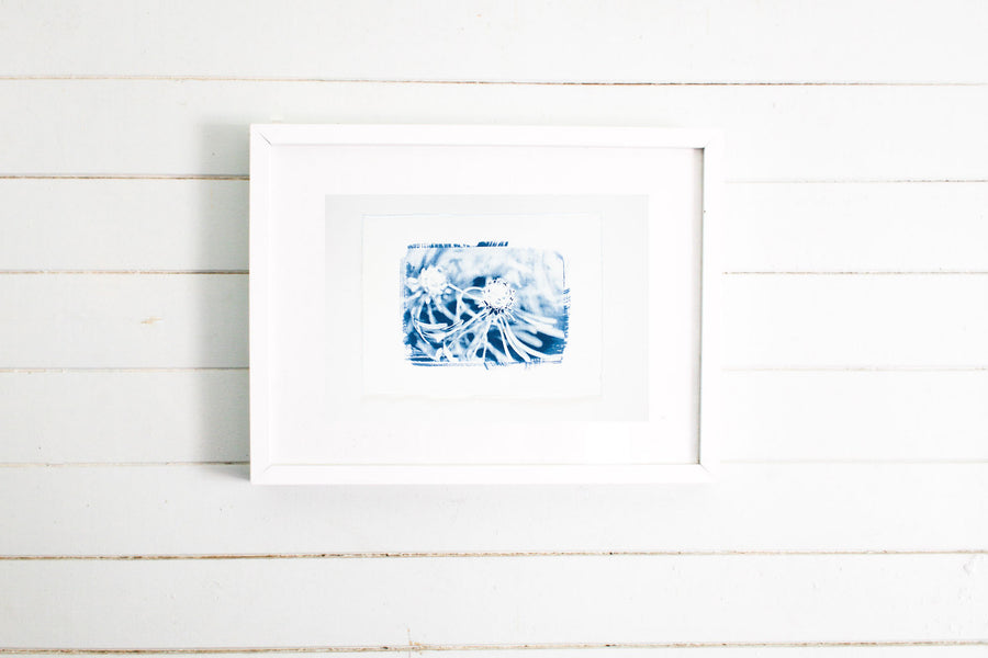 Wild Flower Cyanotype