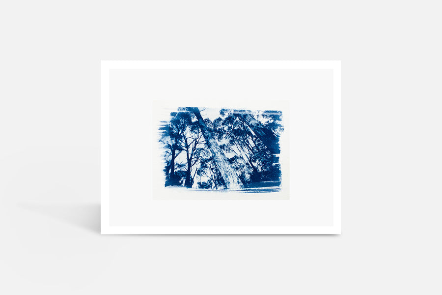 Forest Cyanotype