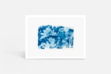 Chicory Flower Cyanotype