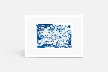 Blood Wood Cyanotype