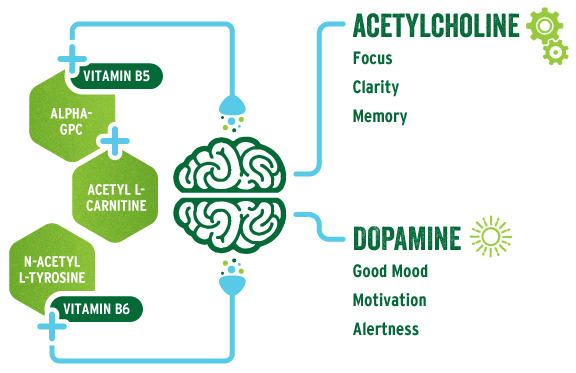 BrainJuice™ | The Science - The Best Brain Supplements