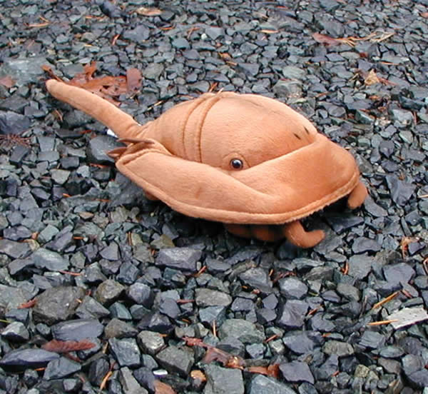 Horseshoe crab plush(46cm/18in)