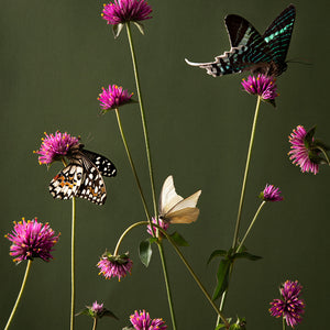 Wild Flowers & Butterflies 2020
