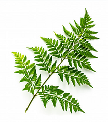 Photo of fern frond by Freepik on ToMA Glass Straws FAQ page
