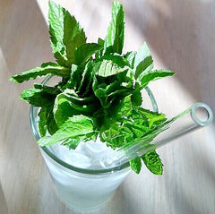 ToMA glass straw in glacier clear in pint glass of ice water with handful of fresh mint leaves on wood table.