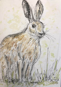 Long Eared Hare in the Wild