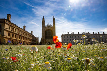 Load image into Gallery viewer, Kings College, The Back's summer meadow view