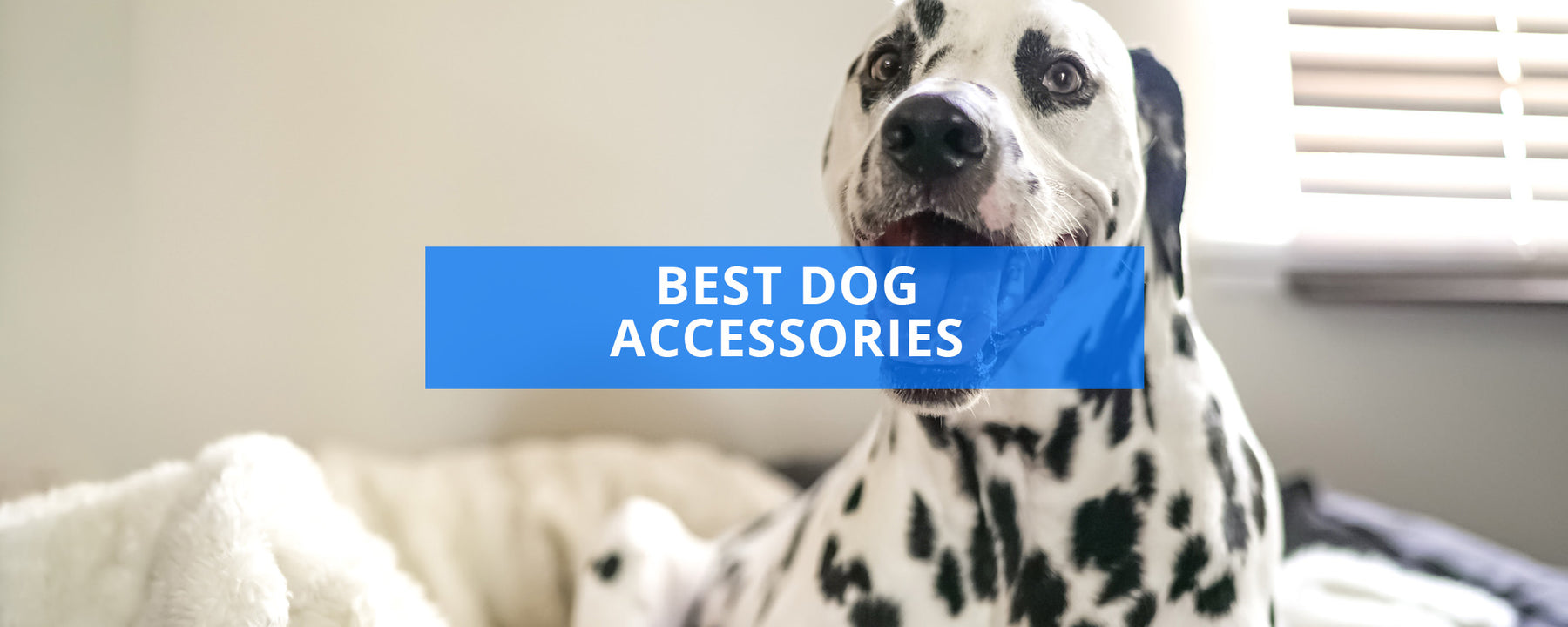 Best Dog Accessories Review