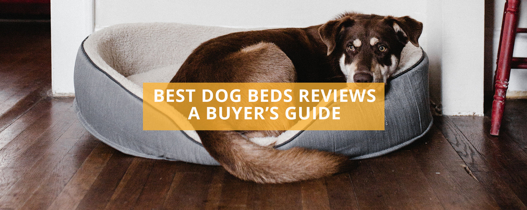 Best Dog Bed Reviews UK - A Buyer's Guide