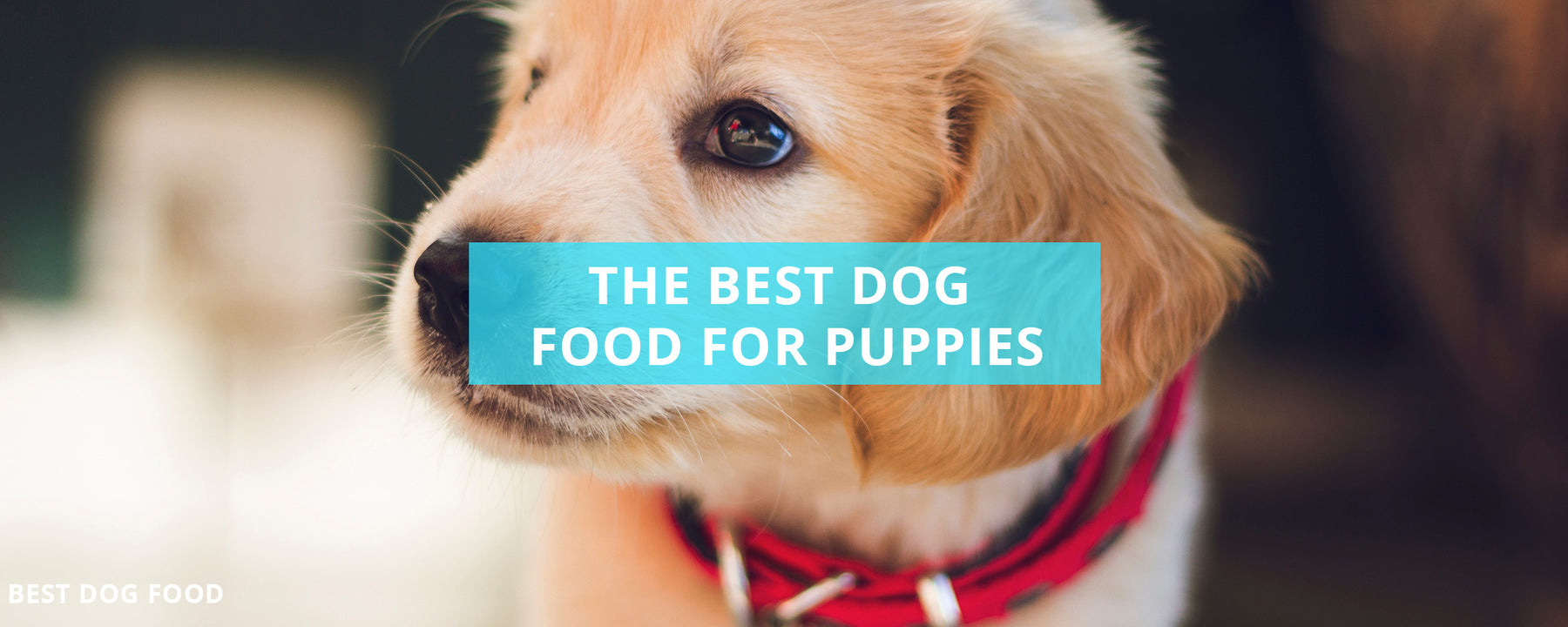 What Is The Best Dog Food For Puppies?