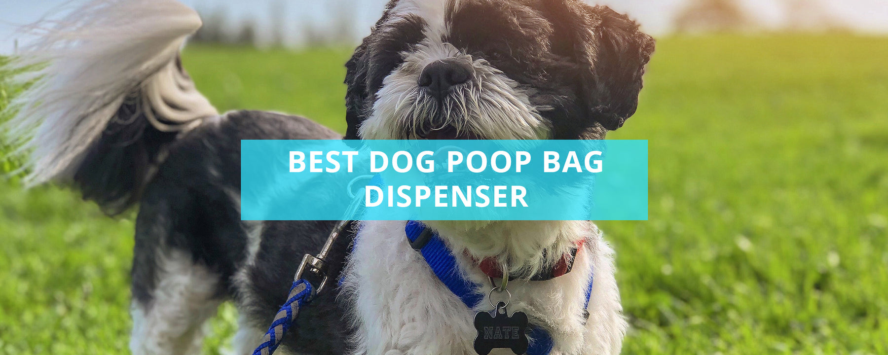 Best Dog Poop Bag Dispenser