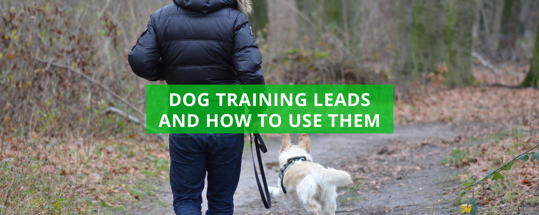 Dog Training Leads And How To Use Them