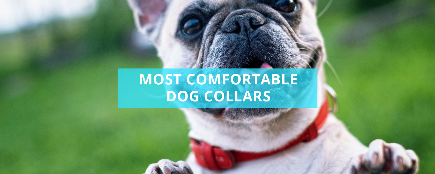 Most Comfortable Dog Collars