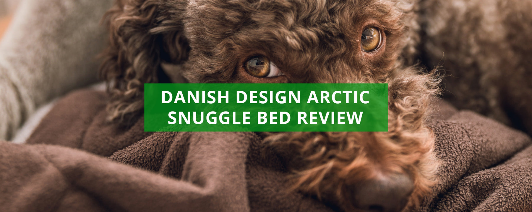 Danish Design Arctic Snuggle Dog Bed Review