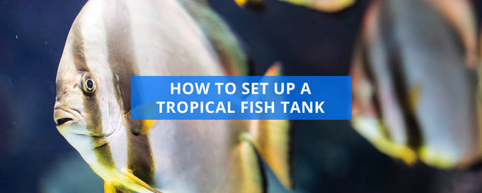 How To Set Up A Tropical Fish Tank For The First Time