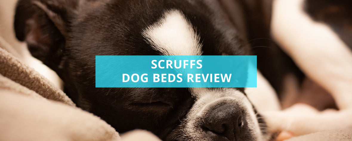Scruffs Dog Beds Review