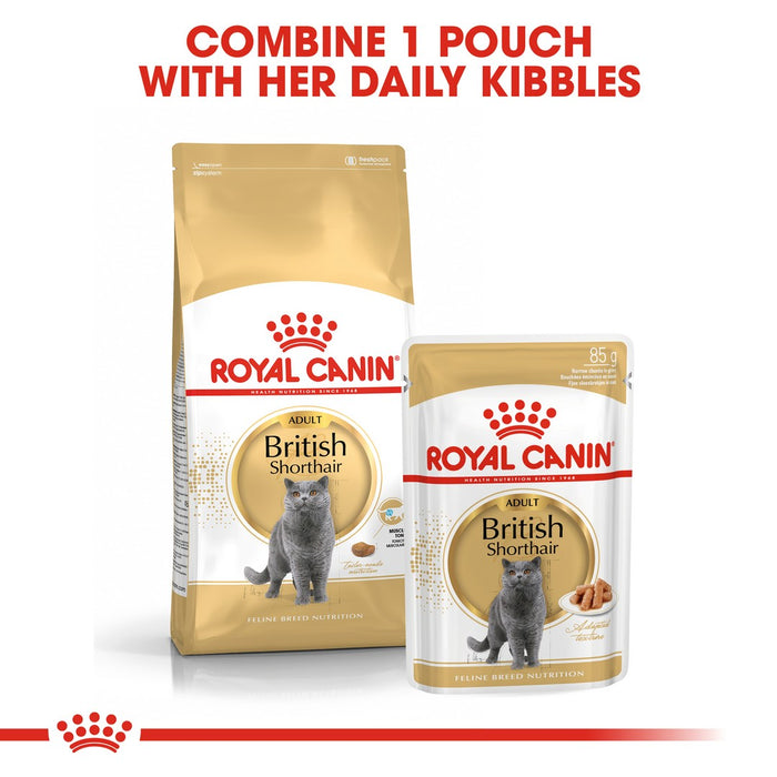 Royal Canin British Shorthair Adult Dry Cat Food - 2kg - PetMonkey