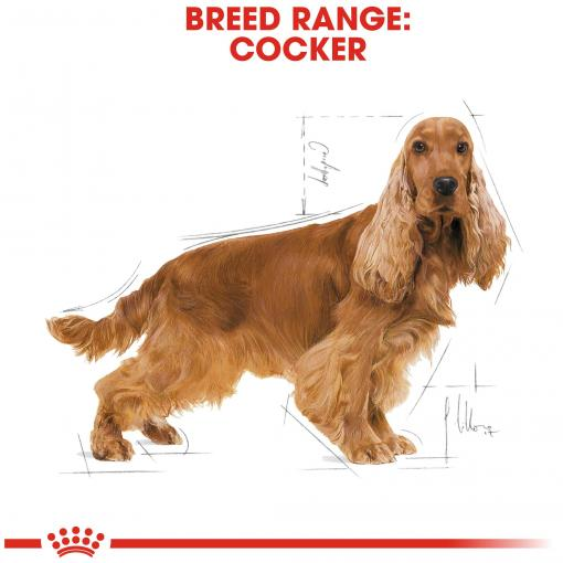 Royal Canin Cocker Adult Dry Dog Food - 3kg - PetMonkey