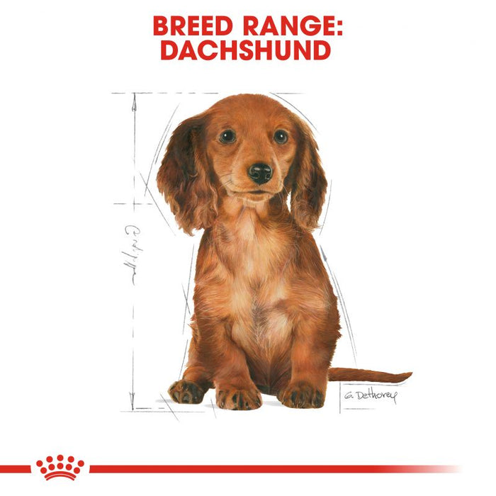 Royal Canin Dachshund Puppy Dry Dog Food - 1.5kg - PetMonkey