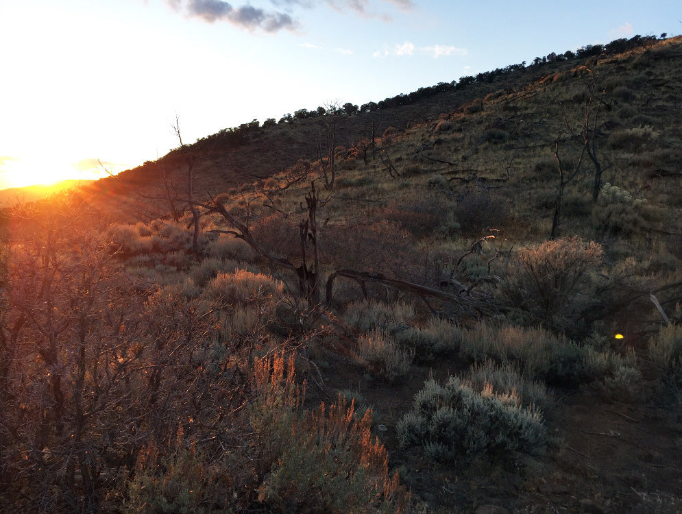 Colorado Hunting Sunset