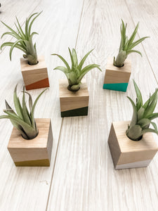 Wood Planter Magnet with Air Plant