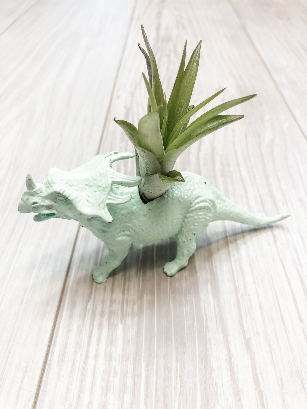 Mint Triceratops Dinosaur Planter with Air Plant
