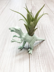 Mint Dinosaur Planter with Air Plant