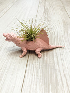 Pink Dinosaur Planter with Air Plant