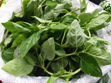 Fresh Organic Basil Leaves - order price / 50 grams