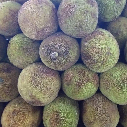 Fresh Organic Davao Marang Fruit - wholesale order price / 10 kilos - Farm2Metro