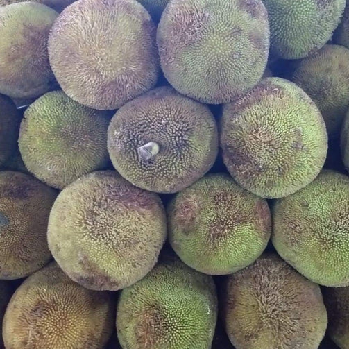 Fresh Organic Davao Marang Fruit - wholesale order price / 15 kilos - Farm2Metro
