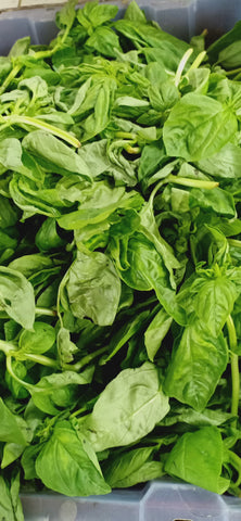 Fresh Organic Basil Leaves - order price / 100 grams - Farm2Metro