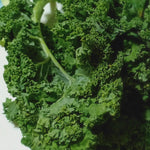 Fresh Organic Curly Kale (order price / kilo) - Farm2Metro