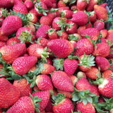 Fresh Local Strawberry - order price / 500 grams - Farm2Metro