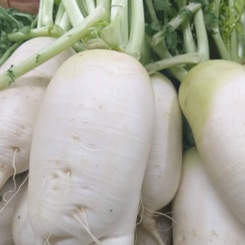 Local Organic Korean Radish - order price / kilo - Farm2Metro
