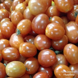 Fresh Organic Local Cherry Tomatoes - order price/kilo - Farm2Metro