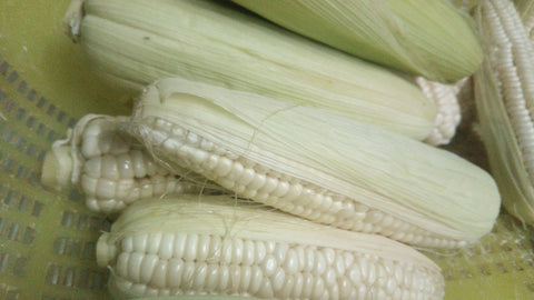 Native White Corn (order price/ per kilo) - Farm2Metro