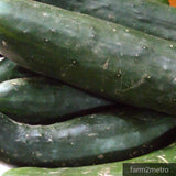 Fresh Organic Cucumber (Pipino) - order price / 500 grams - Farm2Metro